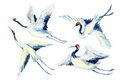 Watercolor Asian Crane Bird Set