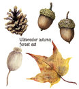 Watercolor autumn forest set. Hand painted pine cone, acorn, berry and yellow leave isolated on white background