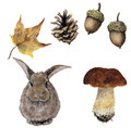 Watercolor autumn forest set. Hand painted pine cone, acorn, hare, mushroom and yellow leave isolated on white background. Botanic