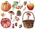 Watercolor autumn harvest bright set. Hand painted pumpkins, leaves, mushrooms, rowan, apple, cone, acorn, woven basket