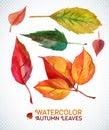 Watercolor Autumn Leaf Set. Il...