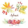Watercolor autumn leaves, flowars and berries
