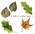Watercolor autumn leaves set. Hand painted fall leaves isolated on white background. Botanical illustration for design