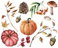 Watercolor autumn plants set. Hand painted pumpkins, leaves, mushroom, rowan, apple, cone, acorn isolated on white
