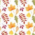 Fall season seamless pattern with watercolor isolated red, yellow, orange tree leaves on white background. Autumn backdrop