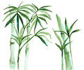 Watercolor bamboo illustration Royalty Free Stock Photo