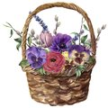Watercolor basket with flowers. Hand painted tulip, pansies, anemone, ranunculus, willow, lavender and tree branch with