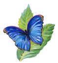 Watercolor blue butterfly on green leaves.