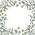 Watercolor border with eucalyptus branch. Hand painted floral frame with round leaves of silver dollar eucalyptus