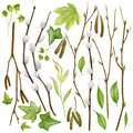 Watercolor botanical collection. Herbs, wild flowers and leaves. Nature set
