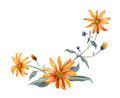 Watercolor branch orange flowers