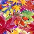 Watercolor briar flowers, berries and leaves seamless pattern.