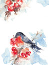 Watercolor bullfinch and ashberry, card layout