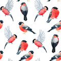 Watercolor bullfinch bird pattern