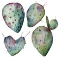 Watercolor cactus set. Hand painted opuntia isolated on white background. Illustration for design, print, fabric or