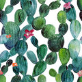 Watercolor cactus tropical garden seamless pattern. Royalty Free Stock Photo