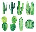 Watercolor cactus vector clip art. Green cacti