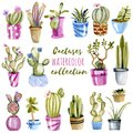 Watercolor cactuses in a pots illustrations set
