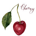 Watercolor cherry with leaf and lettering Cherry. Hand drawn food illustration on white background. For design, textile Royalty Free Stock Photo