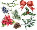 Watercolor Christmas decor set with plant. Hand painted red ribbon, poinsettia, holly, mistletoe, pine cone, juniper and