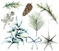 Watercolor Christmas plants and decor. Hand painted fir branches, eucalyptus leaves, white berries, star, fir cone, bow