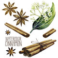 Watercolor cinnamon set