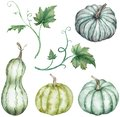 Watercolor clipart of colorful pumpkins - green and blue with leaves. Thanksgiving collection of pumpkin harvest.