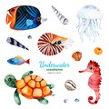 Watercolor collection with multicolored coral fish
