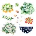 Watercolor collection with succulents plants,pebble stones, branche,wooden pot.