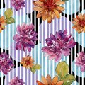 Watercolor colorful african daisy flower. Floral botanical flower.Seamless background pattern.