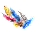 Watercolor colorful bird feather abstract composition isolated