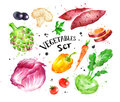 Watercolor colorful set of vegetables
