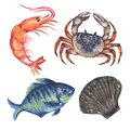 Watercolor composition with Aquatic Animal underwater fish, sea horse, shrimp, crab, squid, coral Hand painted animal silhouette i