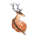 Watercolor deer with horns wood animal Royalty Free Stock Photography