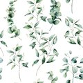 Watercolor different eucalyptus seamless pattern. Hand painted eucalyptus branch and leaves isolated on white background