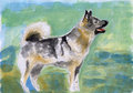 Watercolor dog painting illustration drawing Stock Photos