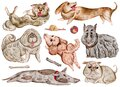 Watercolor dogs and design elements collection. Cute funny characters, dog emotion and feelings. Isolated objects on white backgro