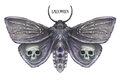 Watercolor drawing of a butterfly night butterfly, a terrible butterfly on a Halloween holiday with a skull on its wings and bone