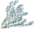 Watercolor drawing of spring tree isolated Royalty Free Stock Images
