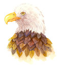 Watercolor eagle an illustration of an done by Royalty Free Stock Images