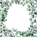 Watercolor eucaliptus leaves frame. Hand painted baby, seeded and silver dollar eucalyptus branch isolated on white