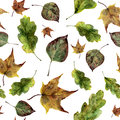 Watercolor fall leaves seamless pattern. Hand painted oak, maple, aspen fall leaves ornament isolated on white Royalty Free Stock Photo