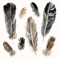 Watercolor Feathers Set On Whi...