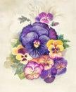 Watercolor Flora Collection: Viola
