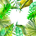 Watercolor Floral background with Tropical leaves for beautiful Royalty Free Stock Photo