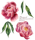 Watercolor floral elements set. Vintage leaves and peony flowers isolated on white background. Hand drawn botanical