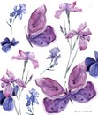 Watercolor floral iris and butterfly on white background 700 dpi Similar illustration leaf geen color