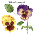 Watercolor floral set with pansy. Hand painted illustration with leaves, viola flowers and branches isolated on white
