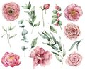 Watercolor floral set with pink flowers and greenery. Hand painted pink roses, buds, berries and eucalyptus leaves
