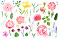 Watercolor flower set over white background Royalty Free Stock Photo